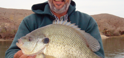 On Feb. 16, 2014, Hector Brito caught a 17-inch, 5.78-pound world-record redear sunfish on a dropshot-rigged nightcrawler.