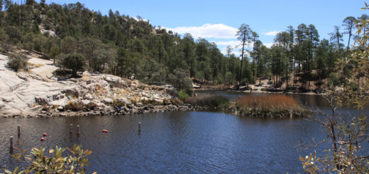 Fishing is predicted to be hot this spring at Rose Canyon Lake, located 30 miles northeast of Tucson, Arizona in the Santa Catalina Mountains near Mount Lemmon.
