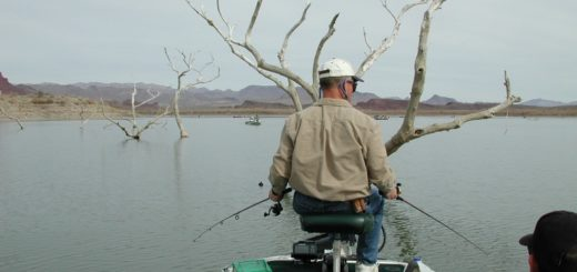 Alamo Lake fishing should get even better soon - and anglers may have the lake all to themselves.